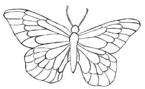 motyl-szablon